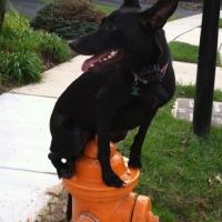 dog training maryland