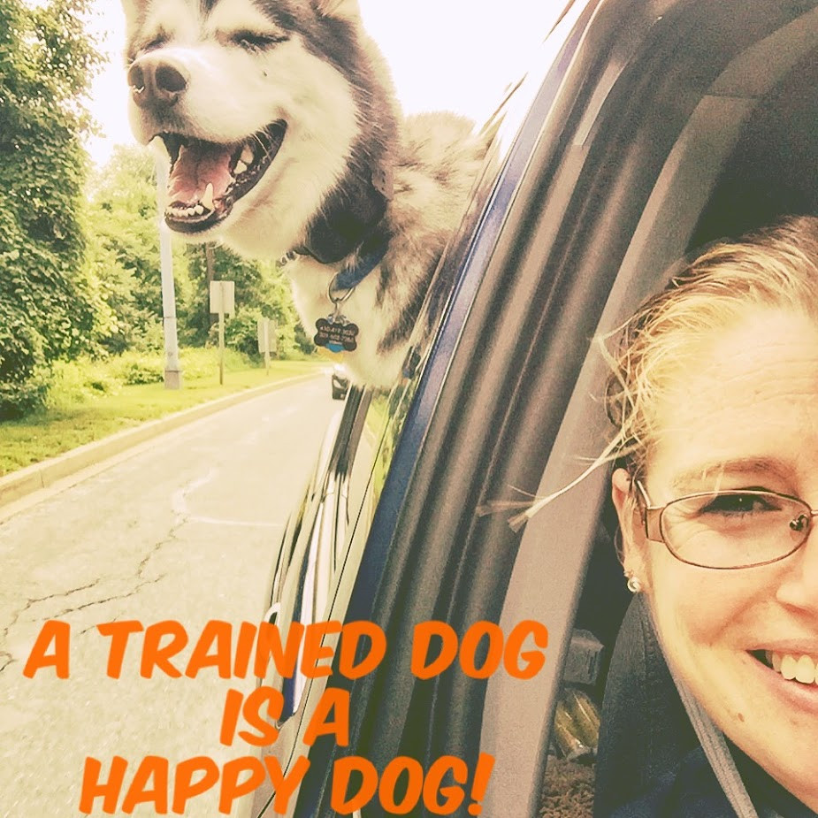dog training maryland