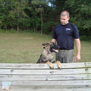 dog training md