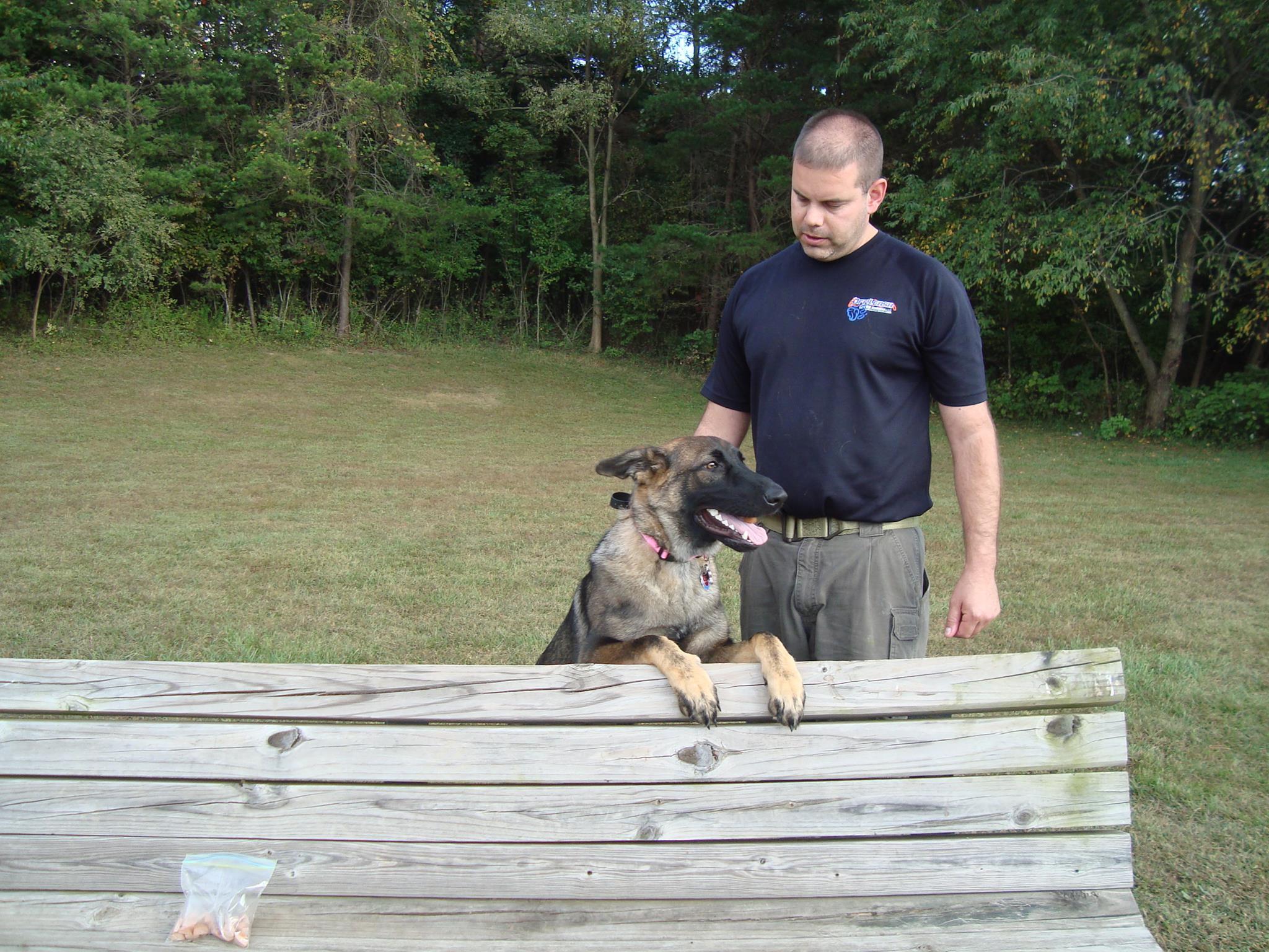 dog training md